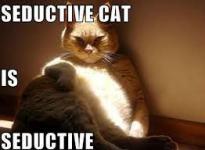 imagesseductive cat