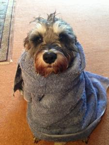 Eddie wrapped in a towel