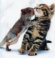squirrel kiss kitten