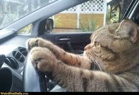 driven cat